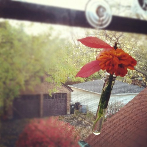 Things I've made today 1: a tiny test tube vase.  (Taken with instagram)