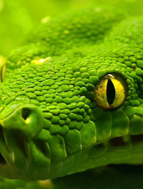 the-bitter-suite:  How? How can people not find snakes beautiful? I don't understand. Fucking look at it.