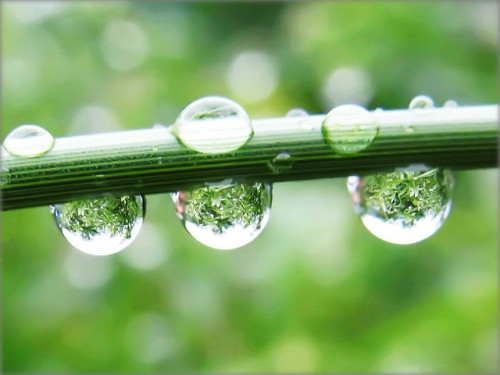 Raindrops with the Refraction of a Green Jungle - Nature in my Garden by Batikart on Flickr.
