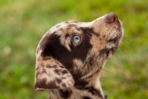bridgingtheworlds:  puppy profile by browndog_09 on Flickr.