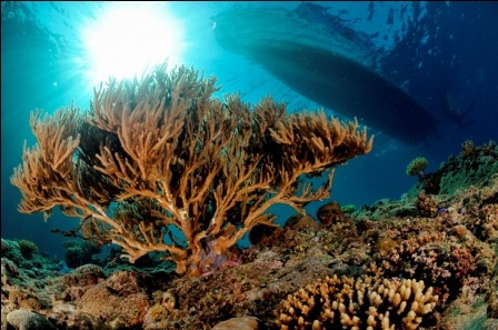 The beauty of Gorontalo's underwater world has long captivated international divers and has earned it the nickname, Indonesia's best kept secret.