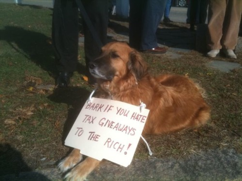 awwccupywallstreet:  Charlie attends Occupy Falmouth on Cape Cod, Massachusetts, Saturday November 12. Submitted by Nancy K.   Falmouth is my hometown! look at this cute activist doggie! love it.