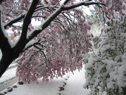crrying:  awklicious:  snow is like a weight on every tree and only the strongest ones dont bend to it but even through the stress they are beautiful   its a tree