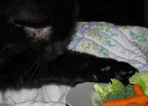 get away from there cat.  five fruits and vegetables a day doesn't apply to cats.
