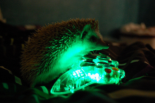 "the-hopeless-romantichick:  ""Yes, I'm a Hedgehog. Yes, I play videogames <3"""