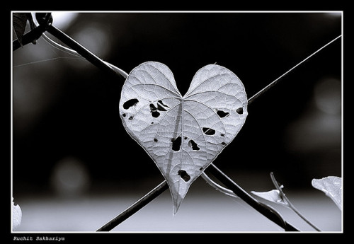 Love hurts - hole heartedly!!! by ruchit05 on Flickr.