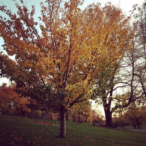 hot cider & fall foliage in prospect park