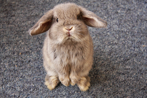 A BUNNY OMG ITS SO CUTE:)
