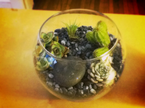 linduhnguyen:  I made it: My first terrarium! Found this bowl at St. Vincent de Paul thrift store for a dollar, then stopped by the local Silverlake nursery and picked up a few plants and supplies. The air plant was a gift from my friend Will.  that greyscale top dressing A++. not sure about the viability of those species indoors and i wouldve liked to see a different arrangement but gj on your first