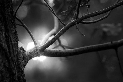 reblogging black-and-white:  Herbstmakro (by 96dpi)
