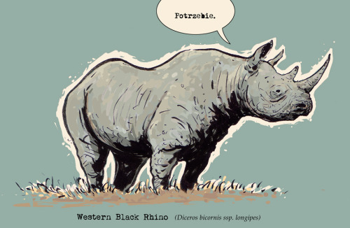 Western black rhino declared extinct  rhino by ~sonny123