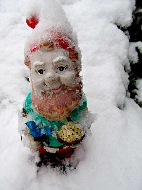 gnome by ohmycheese! on Flickr.This is what my gnomes would look like if I had them outside!!