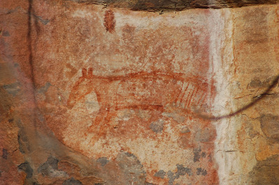 Aboriginal art at Ubirr This ~2200 y.o. drawing of a thylacine is on a cave rock in Ubirr, an aboriginal holy site in the Kakadu National Park, in the Northern Territory of Australia. There is art depicting indigenous wildlife, local spirits, and the aborigines themselves. Since approximately 40,000 years ago, the many rock outcroppings at Ubirr have been painted and re-painted, but the pigment used on this illustration has been dated to (roughly) 200 B.C.E.  The thylacine is known to have been extinct in this area for over 2000 years. Kakadu National Park and Aboriginal Culture
