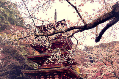 Ugh I want a cherry blossom tree sooo bad!