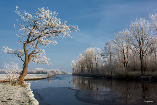 My Favorite Spot at the Polder (Winter)