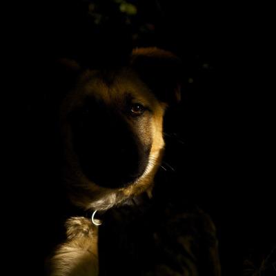 tapie dans l'ombre on Flickr.