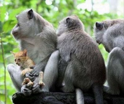 getoutoftherecat:  stop that cat. you are not a monkey.