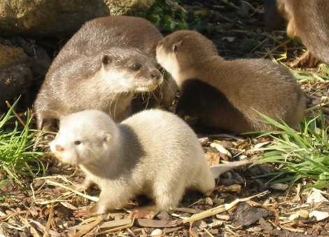 One of these otters is not like the other one…