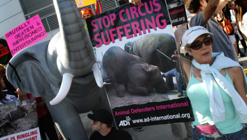 U.S. circuses circle their wagons against elephants lawCircuses are fighting a proposed law that would ban using elephants under the big top, a tradition that animal rights activists say causes suffering.