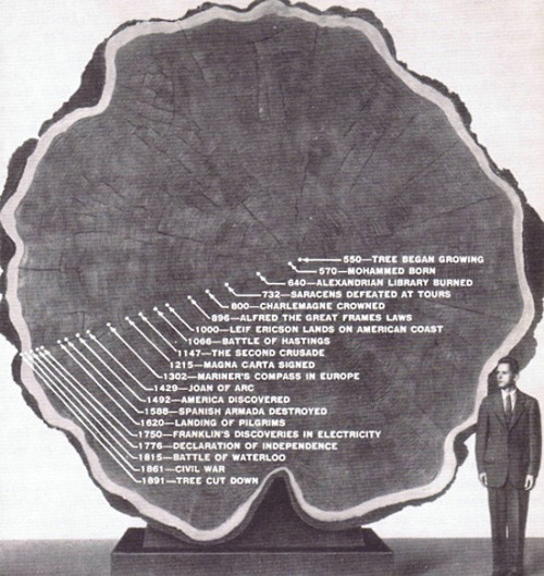 world history through a tree tunk - smart and inspiring!