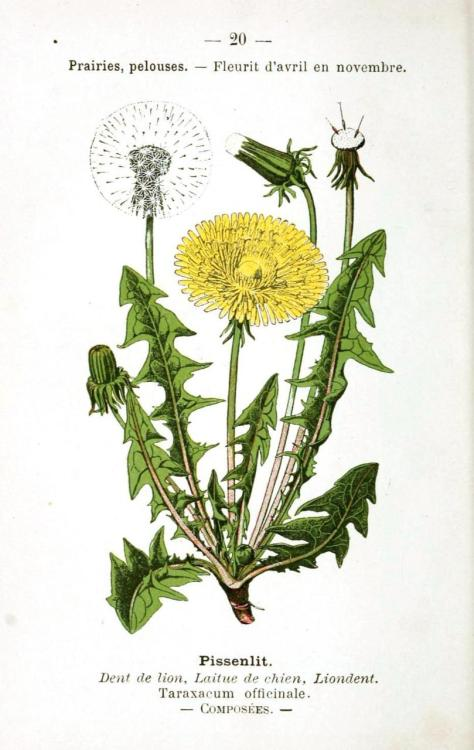 buffaloplaid:  dandelion print.