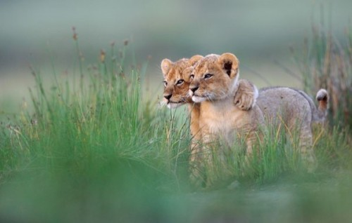 llbwwb:  Todays Cuteness,BFF :) Photo by Grégoire Bouguereau via: Muy Interesante.