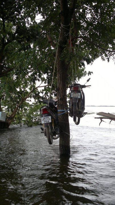 Motorbike Parking in the Tree via Message/Facebook submitted by Siriwat