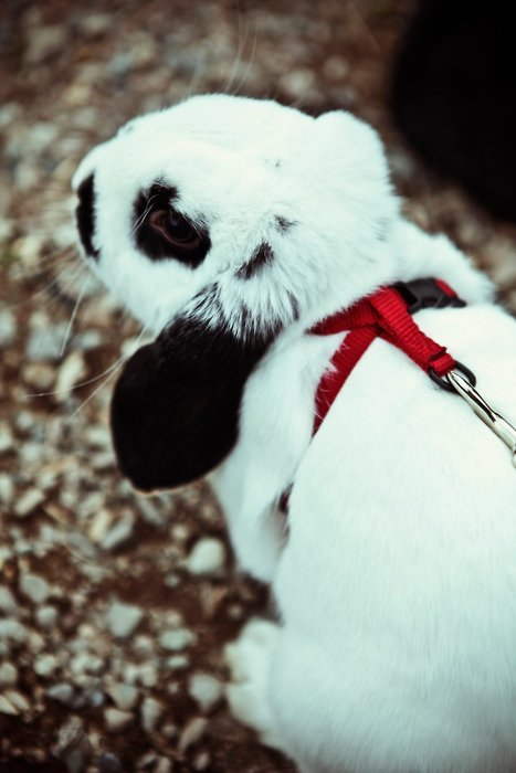EEEEEEEE! BABBYYYYY!! :) :)  dailybunny:  Thanks, abbeyleecook! [On harnesses]