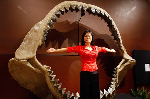 (via Megalodon - Top 10 Unforgettable Shark Moments - TIME)