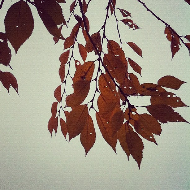 Loving the leaves this foggy morning. (Taken with instagram)