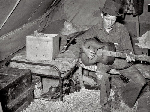 White migrant strawberry picker playing guitar in his tent near Hammond, LA, 1939 Russell Lee