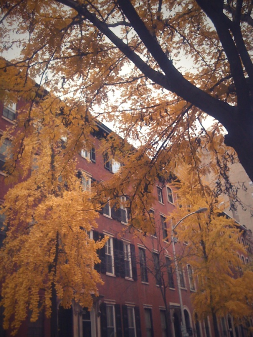 Superb fall foliage on Spruce St. #Philly
