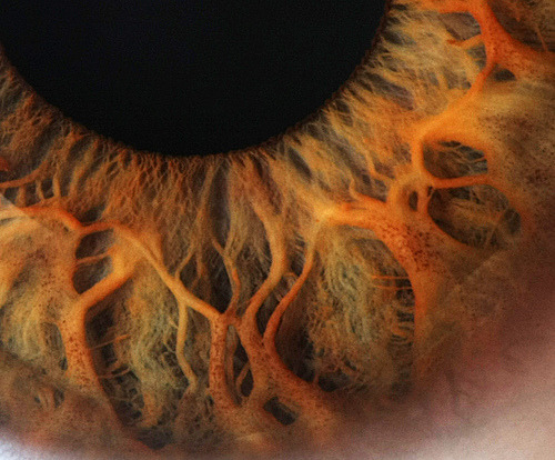 ohscience:  Eye Close Up (by Robert D Bruce)