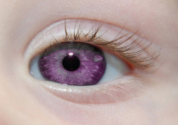 "lmprovident:   ""Alexandria's Genesis, a.k.a violet eyes (a genetic mutation). When someone is born with Alexandria's Genesis, their eyes are blue or gray at birth. After six months, the eyes begin to change from their original color to purple, and this process lasts six months. During puberty, the color deepens to dark purple, a deep purple, a royal purple, or a violet-blue color and remains that way. It does not affect the person's eyesight.Those who have this mutation will never grow any facial, body, pubic, or anal hair (not including hair on their head, on their ears, noses, eyebrows and eyelashes). Women also do not menstruate, but are fertile""  NO FUCKING SHAVING NO FUCKING PERIODS AND I GET PURPLE EYES WHY THE FUCK WASN'T I BORN WITH THIS FUCK WHY CAN I HAVE THIS  ^ BECAUSE IT ISN'T FUCKING REAL"