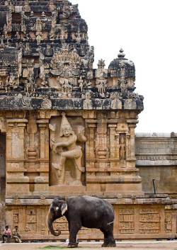 Elephant in front of Tanjore temple - India by Eric Lafforgue on Flickr.