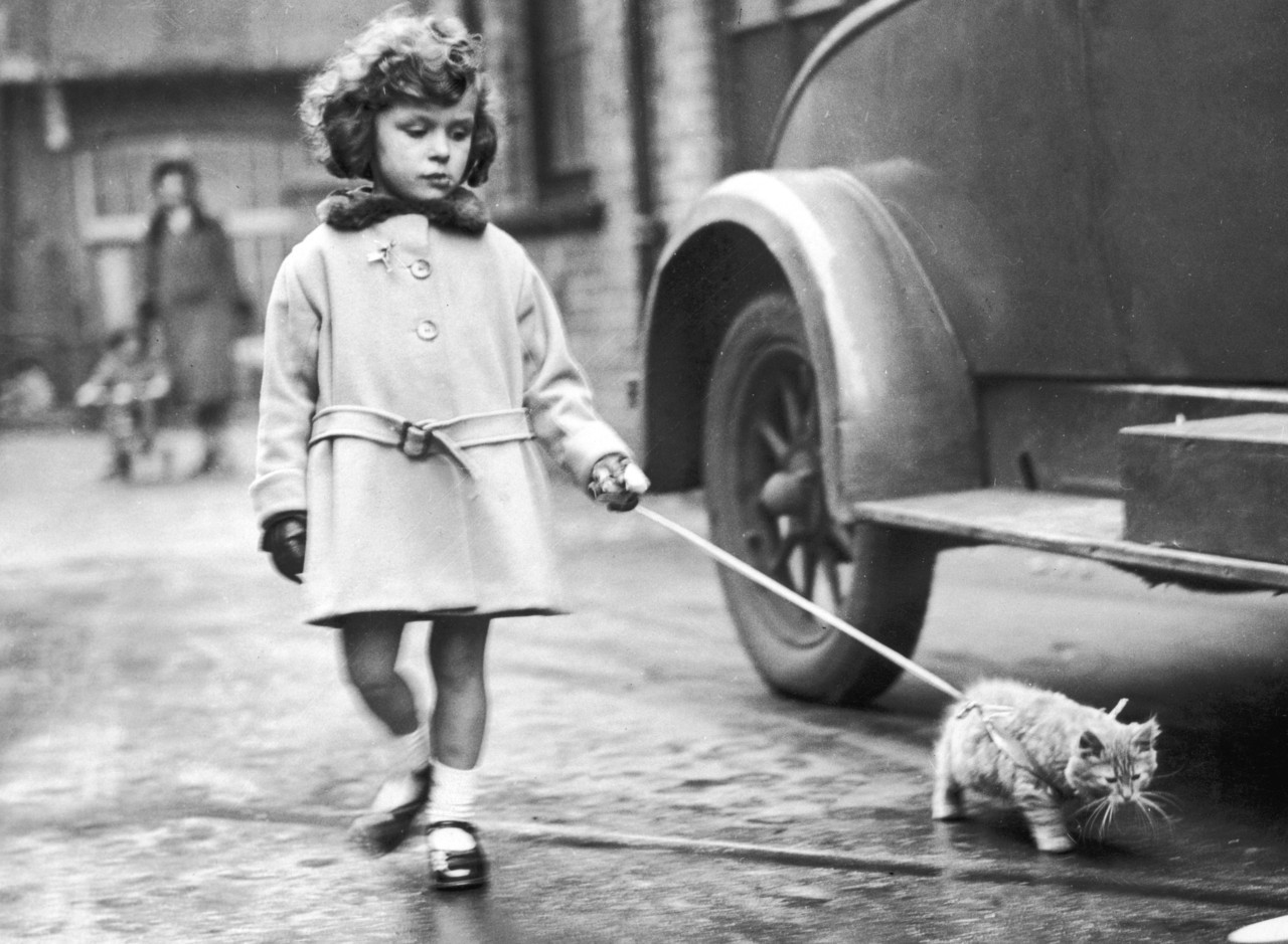 A young exhibitor arrives with her kitten on a lead at the National Cat Club show at Crystal Palace, London, 2nd December 1931.