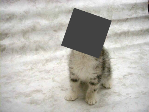 newsweek:  Censored!  Why is this cat's certainly-preciously-cute face censored? Cuz the Internet has some homework.