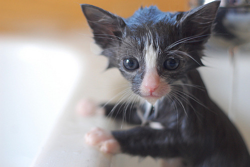 """Where is the Prada shampoo you promised me?!"" Photo via The Itty Bitty Kitty Committee: Bathtime for Babies"