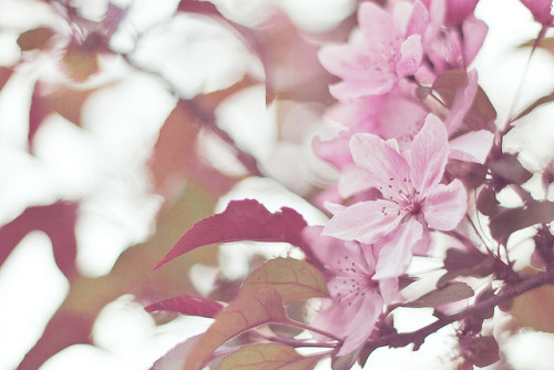 Pink Dream by JoyHey on Flickr.