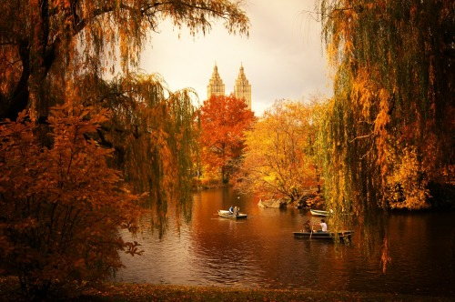 "Autumn landscape through willow trees. Central Park, New York City.  What a surprise yesterday! I got home in the evening after a grueling day to find that my last photo from my celebratory visit to Central Park over the weekend made it to Tumblr Radar. I could barely believe my eyes. Thank you so much Tumblr! (I am still reeling over last month's post that also got featured on Tumblr's Radar) My inbox has exploded with lovely messages which I am very grateful for and will respond to later in the week when I have a bit more time. In the meantime, thank you so much everyone.   When I was at Central Park a few days ago, the weather was deliciously ominous. It was the sort of day when grey clouds do their best to compete with the sunlight for the spotlight. I love the quality of this sort of contrasting light. During moments when the sun does manage to peek through the gray blanket of clouds, the foliage seems to reel in the bits of scattered sunlight.    This is a recent favorite spot of mine in Central Park. It's a vista that seems to come alive in the autumn and winter due in part to Central Park's beautiful willow trees. There is a quality to the placement of the branches that is reminiscent of theatrical stage curtains in a persistent state of dramatically opening to reveal the landscapes that are just beyond their grasp as if they are revealing a show that comes alive in the final two acts of a performance that spans a year.    In the autumn, these sorrow-soaked branches frame the sprawling autumn landscape that surrounds the lake and in the winter when the lake is covered in snow, the same branches hold multitudes of icy tears framing the towers of San Remo perfectly.      —-  View this photo larger and on black on my Google Plus page  —-  Buy ""Sorrow-soaked - Central Park Autumn Landscape"" Posters and Prints here, View my store, email me, or ask for help."