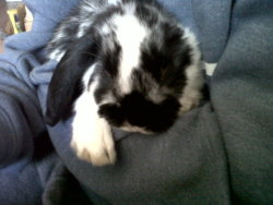 :'( our rabbit Russell who we got for Christmas last year, we bought him for our parents as a surprise they was so shocked and…. angry, but they learnt love him like us :) awwh love you Russell rabbit R.I.P