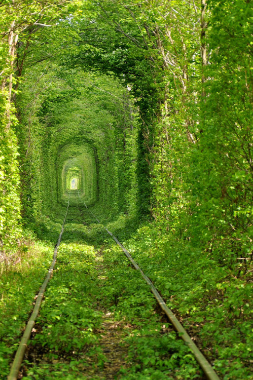 laughingsquid:  Beautiful Photos of the Tunnel of Love in Ukraine