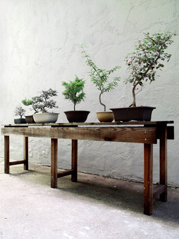 dorsetscouser:  (via I drifted off for a moment)  Having a bonsai garden isn't gay, right?