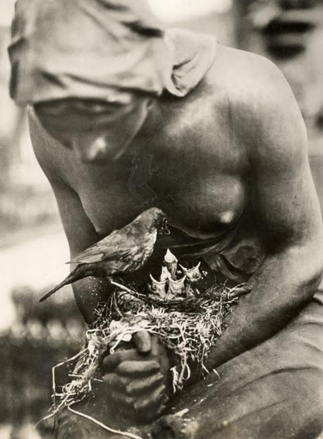 inneroptics:   Photographer unknown-, Blackbird's nest