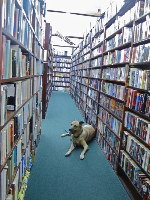 davesoldebookshop:  Hello, buddy. We're pet friendly :)