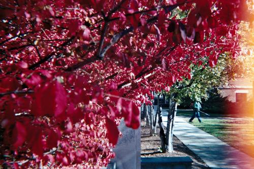Amazing fall colors at Tenley Campus, American University - Washington DC