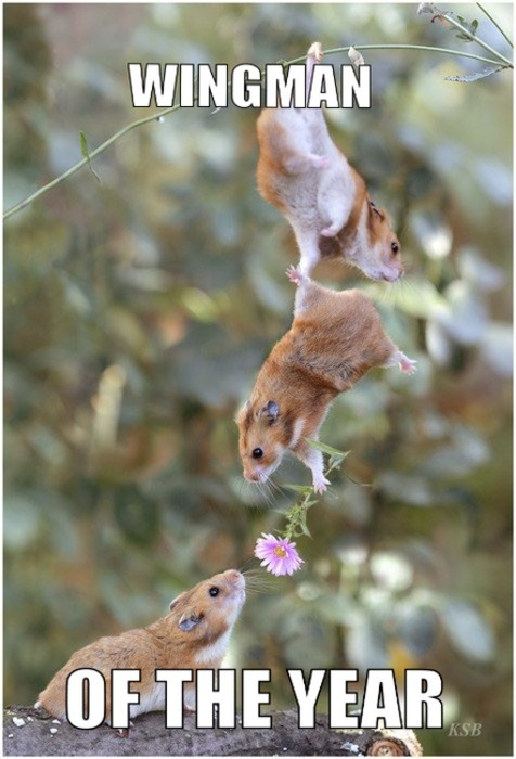 Adorable hamster love!