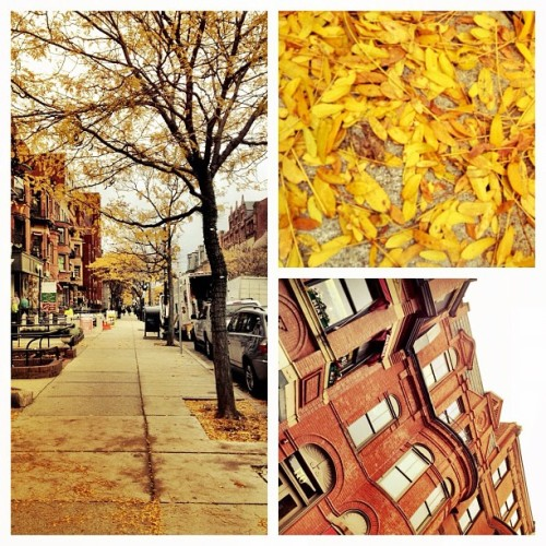 Boston in fall #newbury (Taken with instagram)
