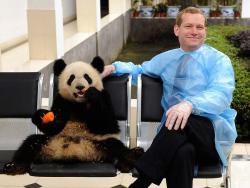 fuckyeahgiantpanda:  Jeremy Browne, British minister of state for the foreign and commonwealth office, poses with a giant panda at the Ya'an Bifengxia Base of the China Conservation and Research Centre for the Giant Panda. Two giant pandas from the facility will be shipped to Britain, where they'll stay for 10 years. It's the first time China has sent pandas to Britain since 1974. Via Critter Talk.