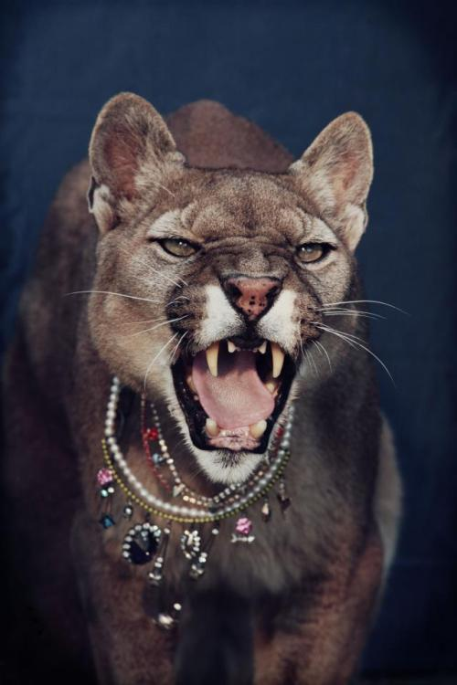 byboe:  Jewels + Jaguar = Love!